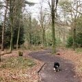 All Ability Trail, Wendover Woods