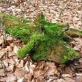 Green Dragon?  No just a moss-covered fallen branch